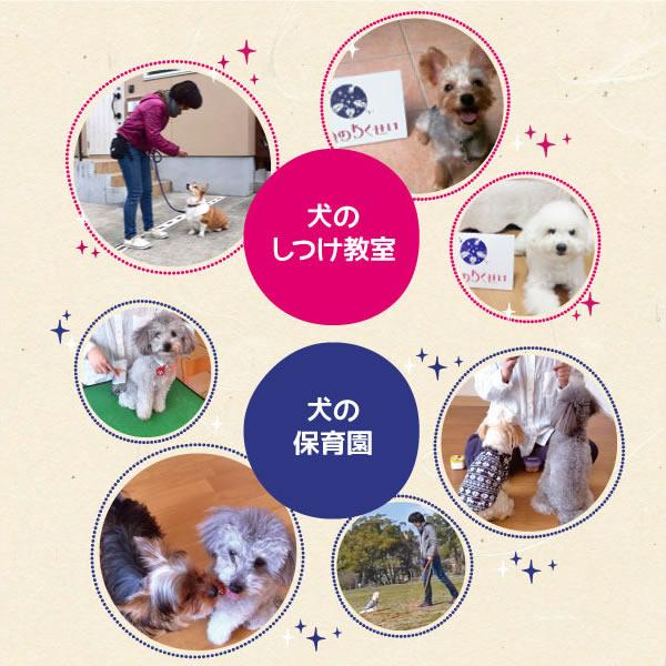 「いぬのわくせい」は福岡にある犬のしつけ教室と犬の保育園です